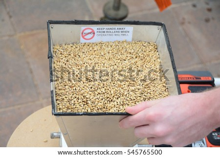 Malted barley grains being milled by hand for home brew
