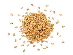 Malted Wheat Grain on a White Background