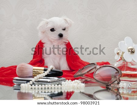 Maltese puppy and women's accessories