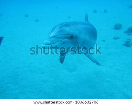 mammal dolphin days approaching ...