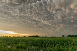 Mammatus clouds at the back of a severe thunderstorm near sunset. This Nebraska thunderstorm produced all kinds of severe weather including large hail.