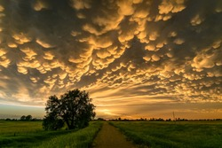 Mammatus Clouds at the Back of a Thunderstorm over Northern Nebraska at Sunset. Mammatus is a cellular pattern of pouches hanging underneath the anvil of a storm cloud.