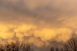Mammatus clouds hanging from the base of a cumulonimbus raincloud, formed during a thunderstorm or extreme weather system, on an orange early evening