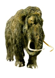 Mammoth isolated.