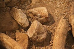 Mammoth skeleton and teeth grave