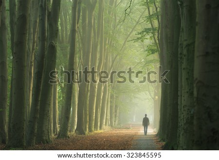 Man alone walking in a foggy lane of trees during a nice, autumn sunrise.