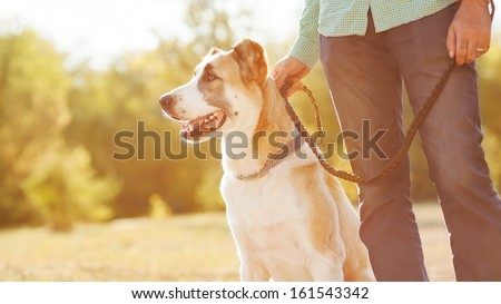 Man and central Asian shepherd walk in the park. He keeps the dog on the leash. #161543342