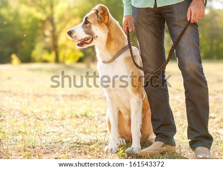 Man and central Asian shepherd walk in the park He keeps the dog on the leash