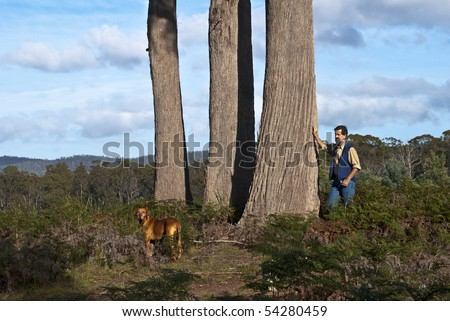 Man and dog by three large eucalyptus trees in Australian bush