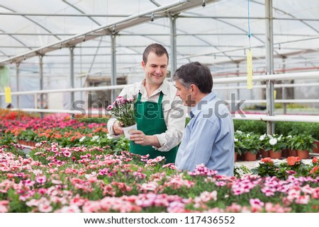 Man and employee looking at flowers in greenhouse in garden center