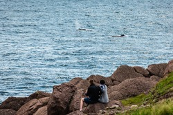 Man and woman watching humpback whales at Cape Spear, Newfoundland