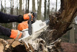 Man at work holding chain saw cutting off a branch of a dead tree for firewood. Outdoor lumberjack working. Wood cutting equipment. Action scene dangerous job.