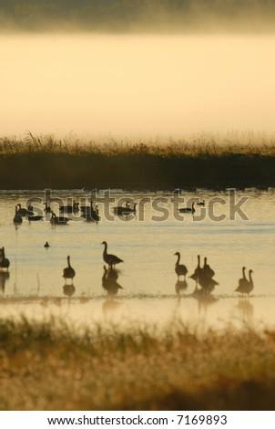 Man birds seek refuge in wildlife refuges such as this wetland.