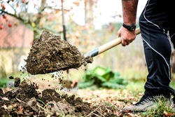 Man boot or shoe on spade prepare for digging. Farmer digs soil with shovel in garden, workers loosen black dirt at farm, agriculture concept autumn detail.