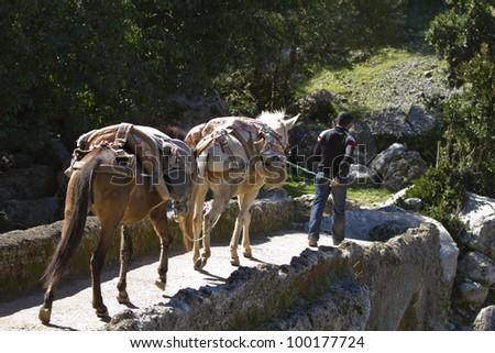man crossing a bridge with two mules
