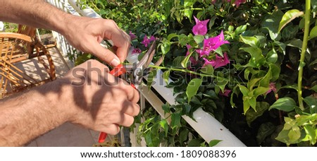 Man cuting the flowers and leafs in balcony Stok fotoğraf ©