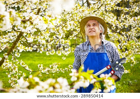 Man cuts cherry tree in the blossom  #289850414