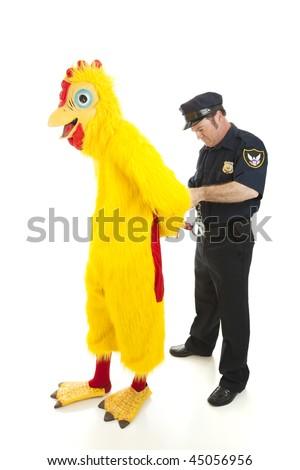 Man dressed as a chicken is being placed in handcuffs by a police officer.  Isolated on white.
