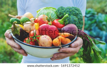 Man farmer with homemade vegetables in his hands. Selective focus. nature.