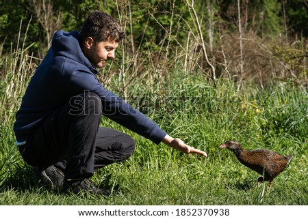 Man feeding weka bird, New Zealand flightless native bird. Foto stock ©