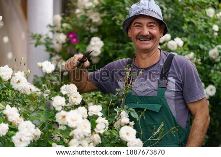 Man gardener cut the rose bush in the wonderful garden on a sunny day.