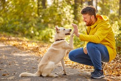 man give high five to lovely pet dog in the forest, friendship between peopel and animals, during walk. active man love his pet. side view