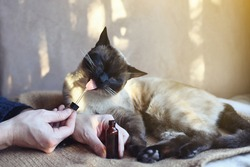 Man giving CBD oil to his feline pet at home as treatment
