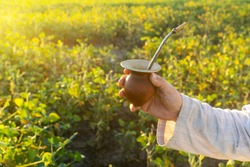 Man hand holding a Mate drink in a field of soy beans with sunlight coming from behind and copy space.