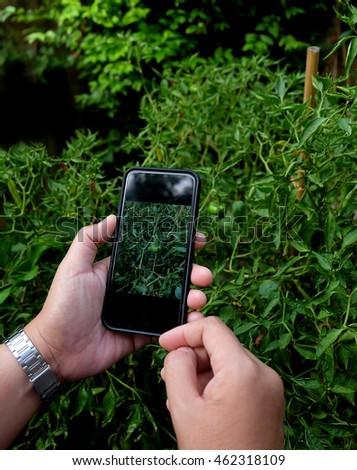 Man hand holding mobile smart phone in garden #462318109