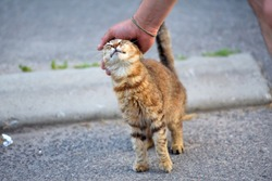 Man hand petting a cat . Нomeless striped cat  on the street