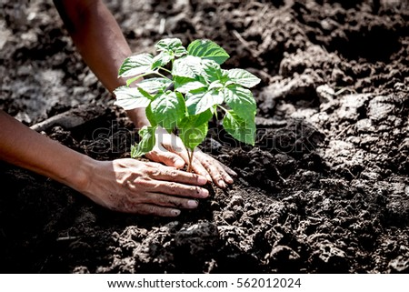 Man hand planting young tree on black soil as save world concept - Shutterstock ID 562012024