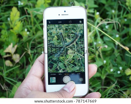 Man hand using smartphone take photos of grass flower. #787147669