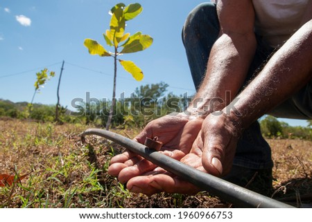 Man hands checking a valve in his irrigation water system  Foto stock ©