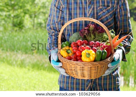 Man hands holding a basket full of vegetables in the garden