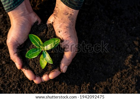 man hands holding a green seedling, sprout over the soil. Top view. New life, eco, sustainable living, zero waste, earth day, investment concept. Reduce global warming problems To be environmentally Photo stock ©