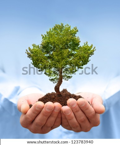 Man hands holding green tree. Ecology concept