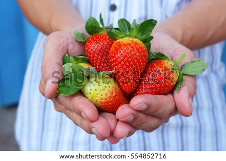 man hands holding handful of red fresh strawberries. #554852716