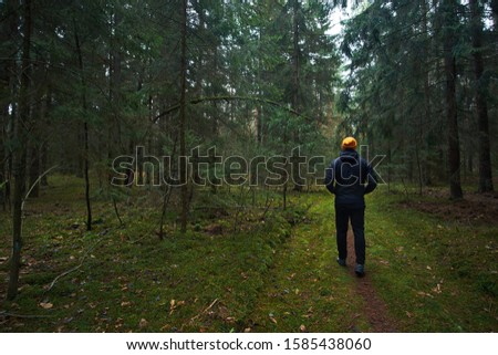 Man has a walk in rainy autumn spruce forest