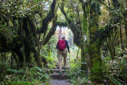 Man hiking bay the trail in the forest.Nature leisure hike travel outdoor