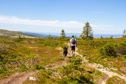 Man hiking with a Bernese Mountain Dog in Trysil, Norway. It is a beautiful summer day and he has a beautiful view over the mountains. He is carrying a backpack and the nature is green.