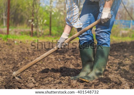Man hoeing vegetable garden soil, new growth season on organic farm.