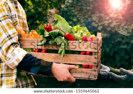 Man holding a crate of fresh vegetables and give it to woman hands. Producing organic food in farm.Close up view  #1359645062