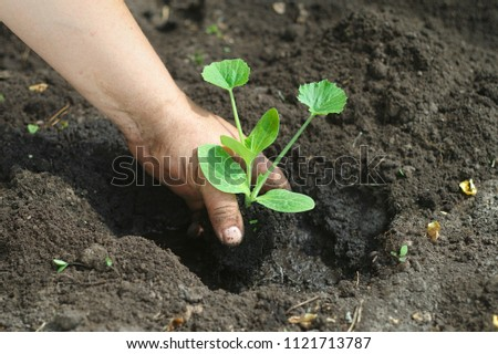 Man holding a young green plant growing on the bed #1121713787