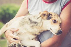 Man holding beautiful street-mix dog in arms, helps dog, abandoned dog