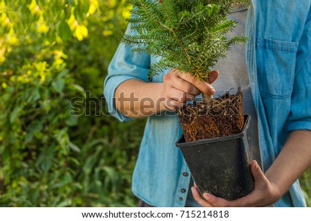man holding fir spruce with roots and dirt in a pot ready to be plant - eco-friendly christmas tree concept