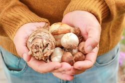Man holding flower bulbs in his hands