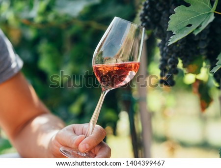 Man holding glass of red wine in vineyard field. Wine tasting in outdoor winery. Grape production and wine making concept.
