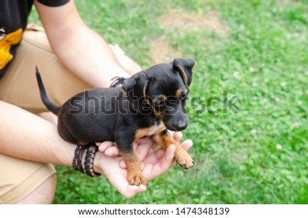 Man holding in his hands a baby dachshund in the garden #1474348139