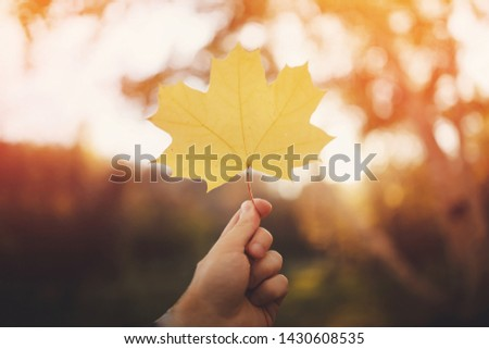 Man holds an autumn yellow leaf. Concept new life, Sunlight. #1430608535