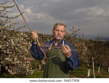 Man holds blossoming tree
